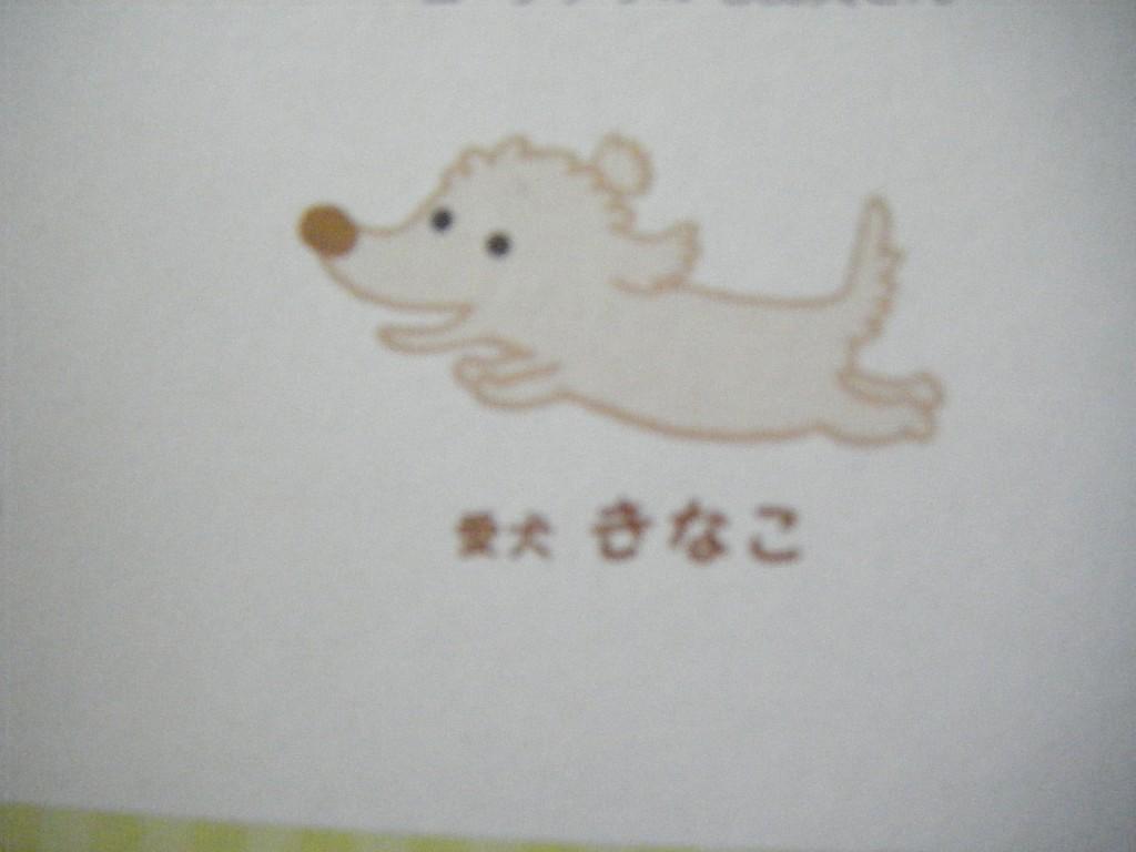 兼業主婦の食材宅配体験談 コープデリの箱ティッシュに書いてあったほぺたんの愛犬「きなこ」