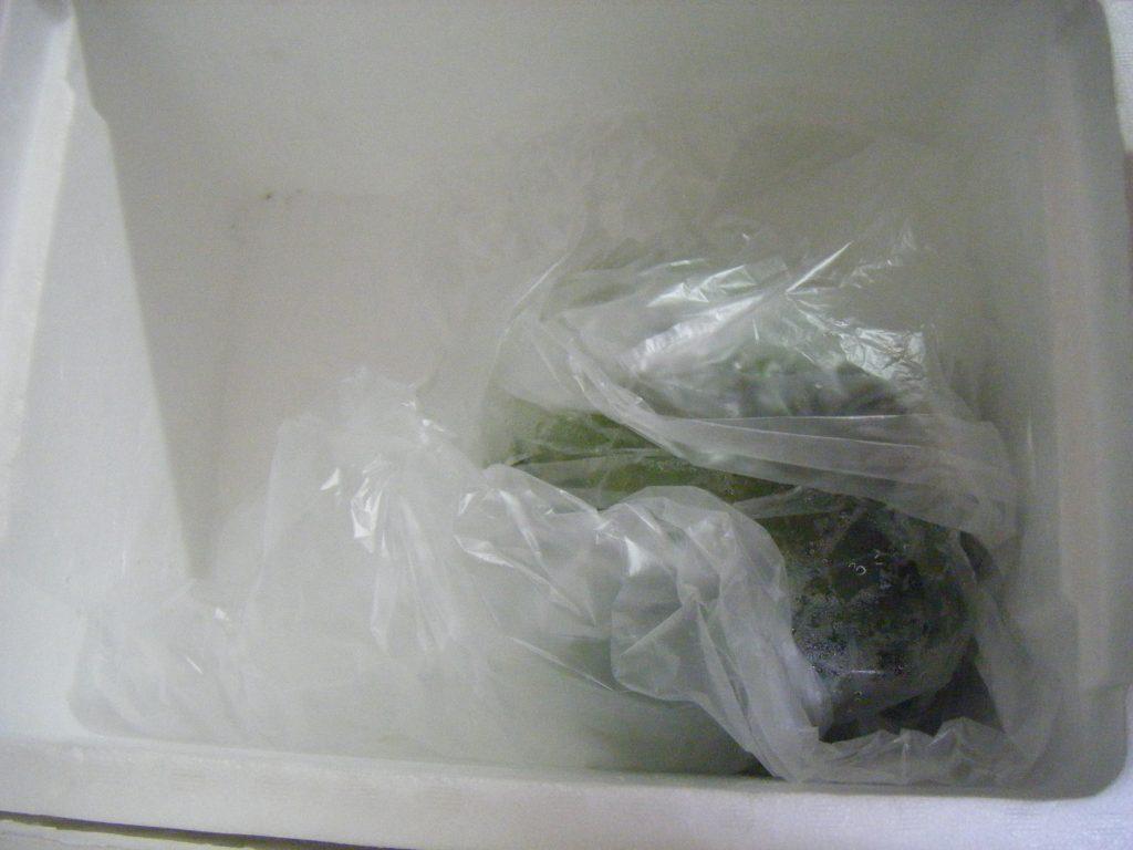 兼業主婦の食材宅配体験談 パルシステムの梱包が手厚すぎるぞ!厳重な保冷の後に現れた1個の野菜