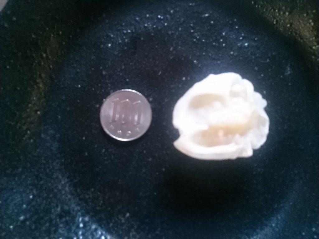 食材宅配コープデリで購入した「プリッとしたエビシュウマイ」100円玉と大きさを比較