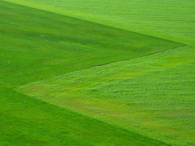食材宅配パルシステムの九州ほうれん草をお試ししてみたよ!