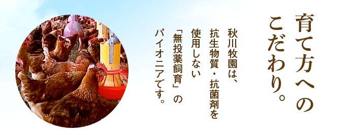 秋川牧園鶏肉育て方のこだわり